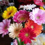 今週おすすめの花!『ガーベラ』