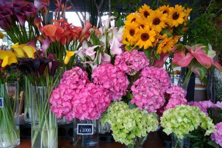 ハナモの店内は、紫陽花でいっぱいです♪