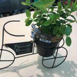 小さな観葉植物たち!癒しの空間 緑のある生活