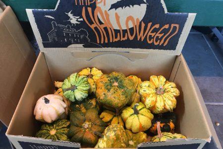 10/31(水) ハロウィン かぼちゃを入れたアレンジメント!