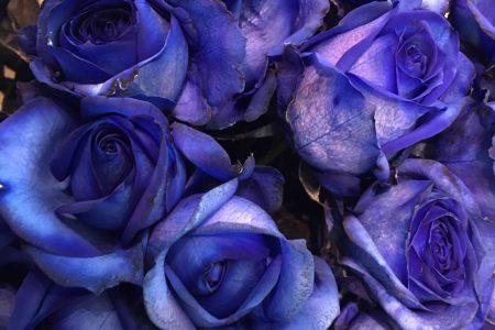 綺麗な青いバラ入荷しました!
