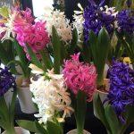 ハナモの店内 今週の花でアレンジメント!