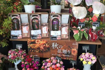 今週入荷の花 09/09 【敬老の日】おじいちゃんおばあちゃんにお花をプレゼント!