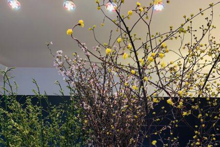 今週入荷の花&ハナモの店内 春満載!