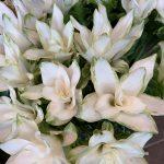 今週入荷の花&お彼岸